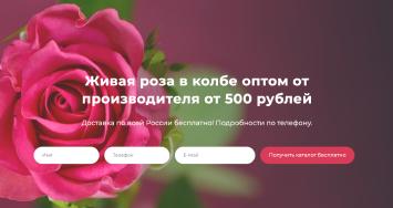 Сайт роза в колбе